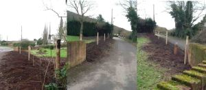 Ground for new hedge from all angles from