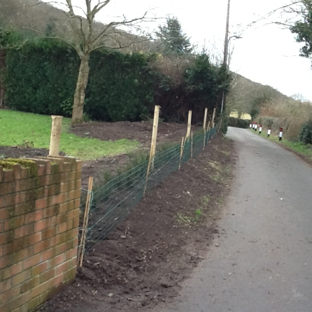 1l yew hedge fenced