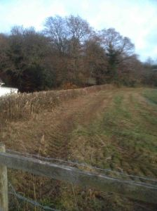 Very short hedge on the top side of field 2