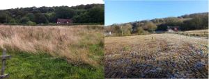 August 2014 on the left and December 2014 on the right View up the hill in Field 1