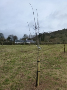 North Easterly View of Orchard