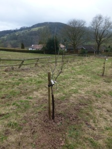 South Easterly view of Orchard
