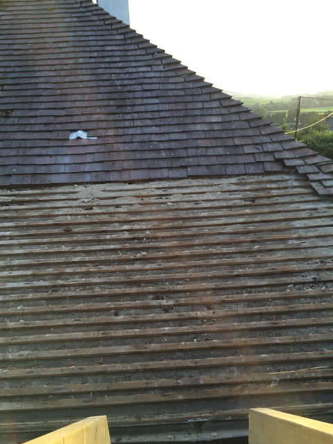 Another view over utility room roof where tiles have been removed under supervision of bat ecologist