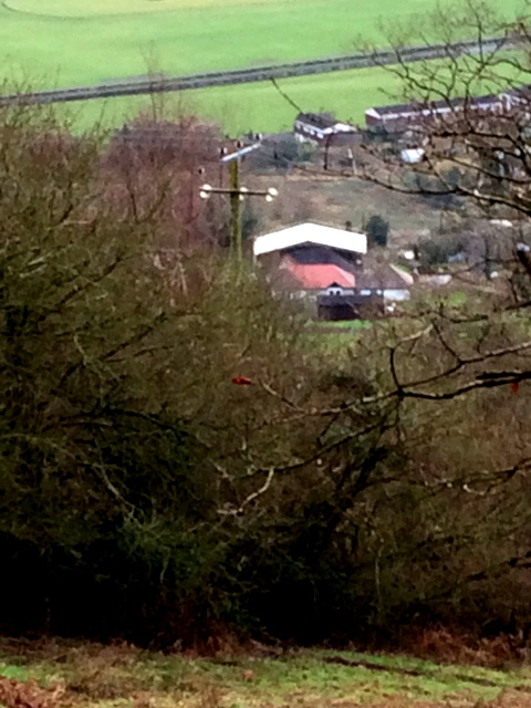zoomed-in-photo-of-canopy-from-hillside-above-the-house