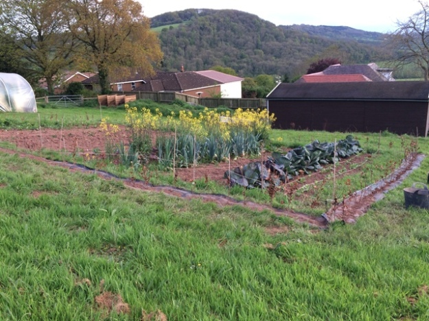 View of veggie plot