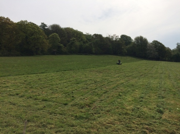 Grass cutting in 2nd field pic 2